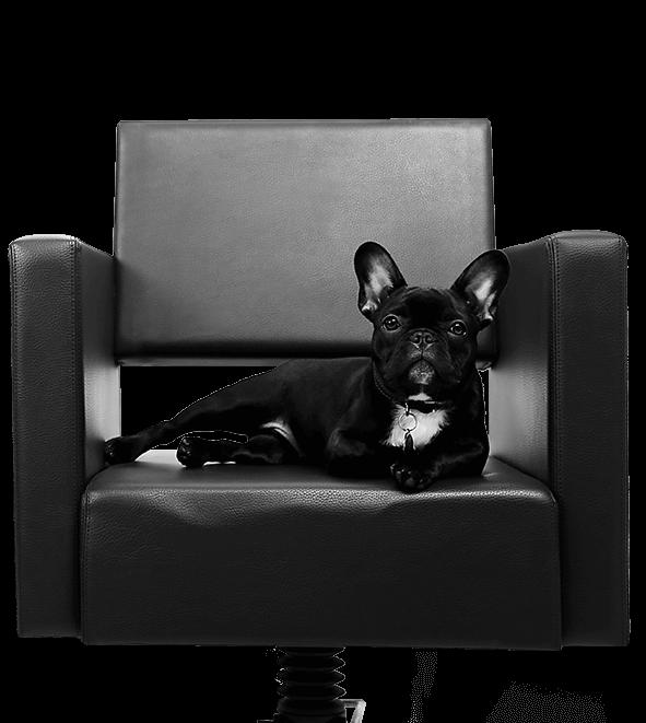 Emma - Salonhund